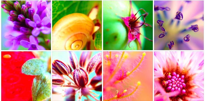 Cindy Cinnamon - Le Sexe des Fleurs - Photos Naturelles